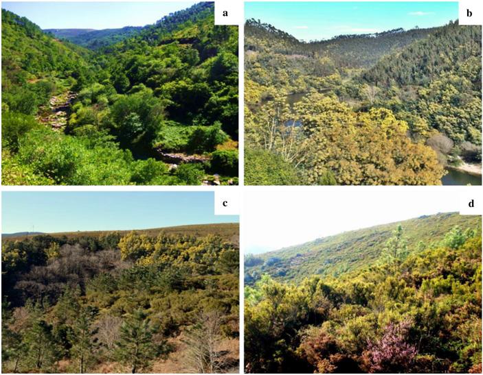 Знание инвазивного статуса растения влияет на его эстетическое восприятие