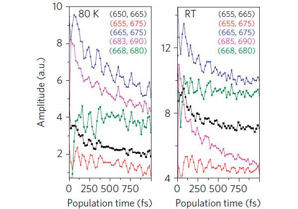 Рис. 2. По данным измерений квантовая когерентность длится дольше пикосекунды