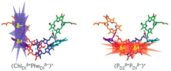 Рис. 3. Два примера локализованных электронных возбуждений в фотосистеме II