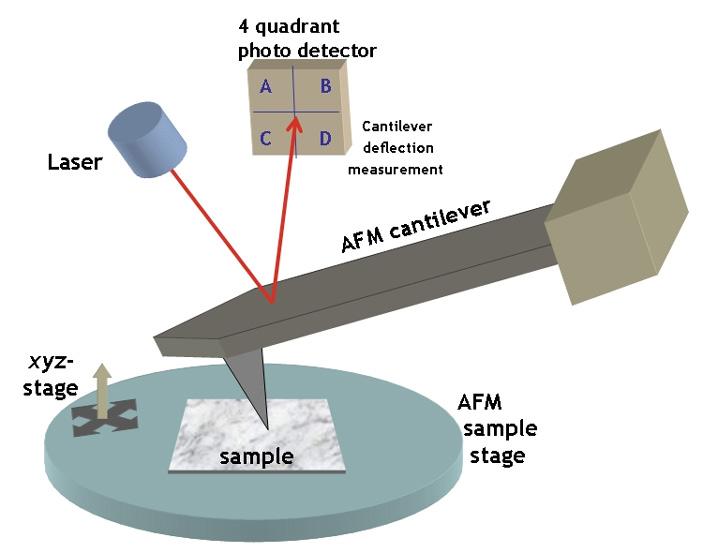 Рис. 2. Схема работы атомно-силового микроскопа