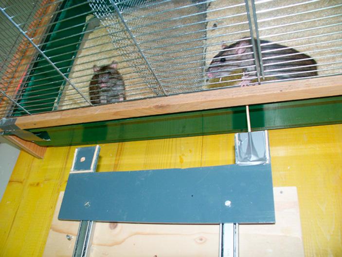 Рис. 2. Фото экспериментальной установки. Клетка разделена на две равные части сеткой