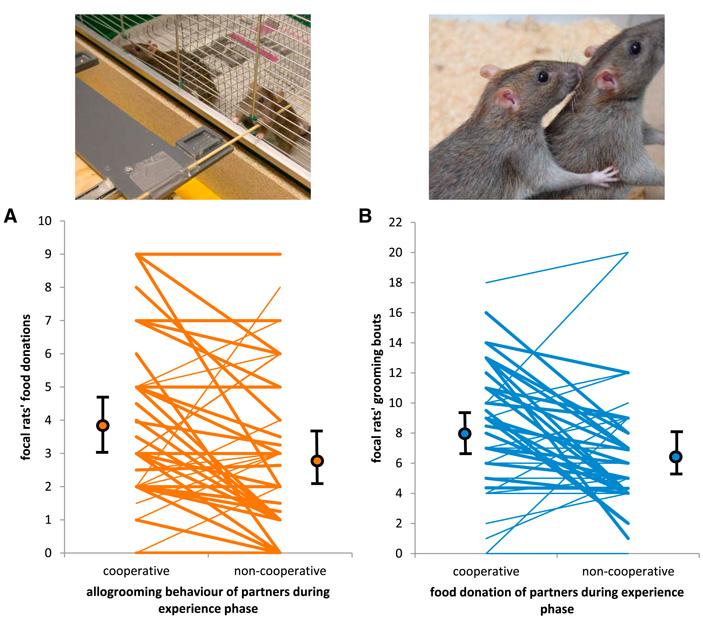 Рис. 4. Частота оказания тестируемой крысой услуг своему партнёру взависимости от того, помог или не помог он ей ранее
