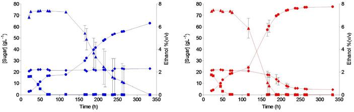 Рис. 4. Изменение концентрации углеводов и спирта при выращивании дрожжей на сусле в биореакторе