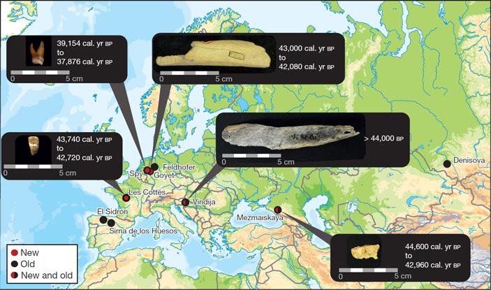 Рис. 1. Пять неандертальских косточек и зубов, из которых удалось выделить древнюю ДНК в достаточном количестве