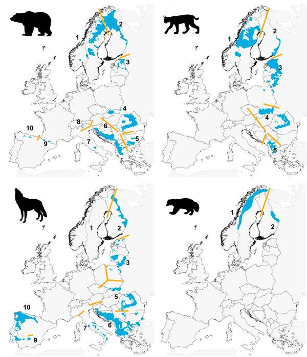 Рис. 2. Территории Европы, где оставались крупные хищники в 1950–70 годы