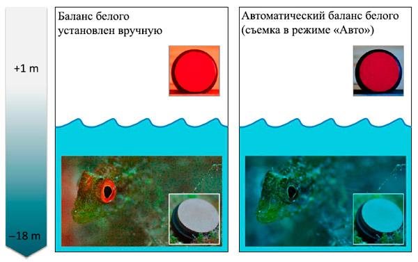 Рис. 4. Флуоресцентное окологлазничное кольцо, сфотографированное в естественном местообитании на глубине 18 м
