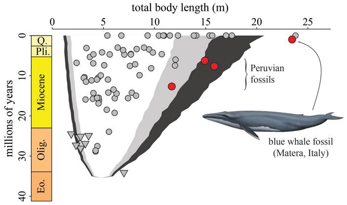 Рис. 4. Изменение размера китов со временем