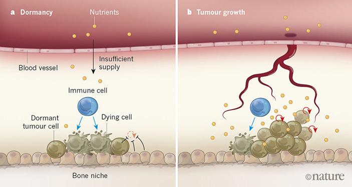 Опухолевые клетки удерживаются в неактивном состоянии многими факторами