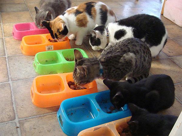 Сегодня люди кормят своих любимых питомцев, но, как свидетельствуют данные палеонтологии, 2млн лет назад именно кошки обеспечивали мясом людей и заставляли их всемерно совершенствоваться. Фото ссайта www.flickr.com/photos/izzis6hams