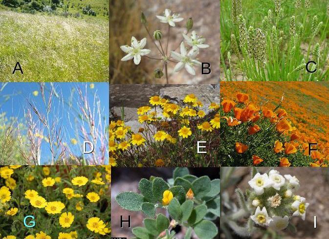 Растения, использовавшиеся в исследовании.