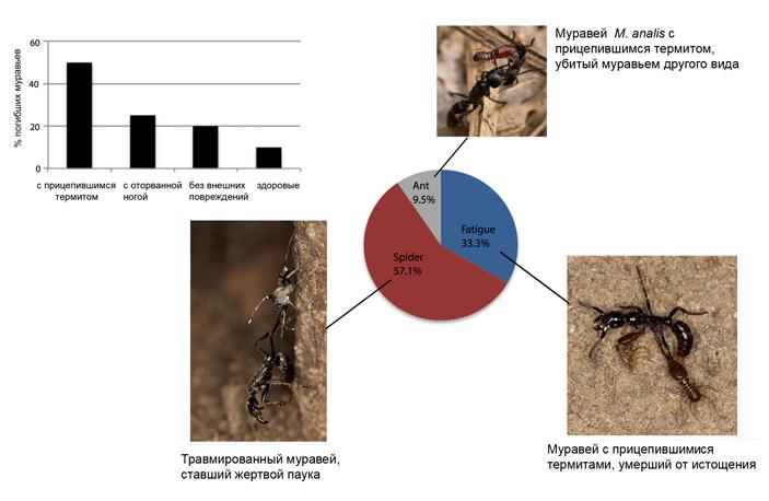 Судьба муравьев, оставленных учеными на произвол судьбы