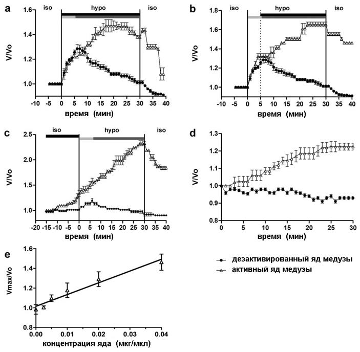 Влияние яда пелагии на изменение объема клеток (на примере HEK293 Phoenix)