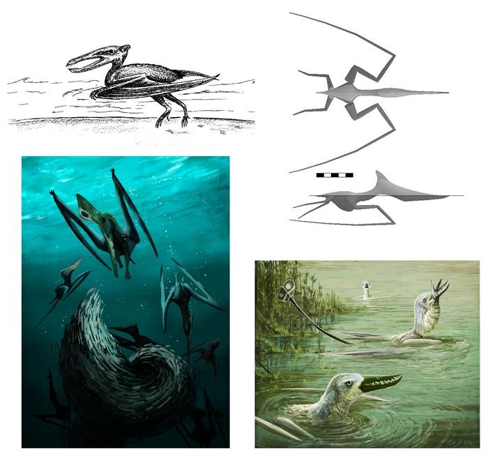 Плавающие птерозавры