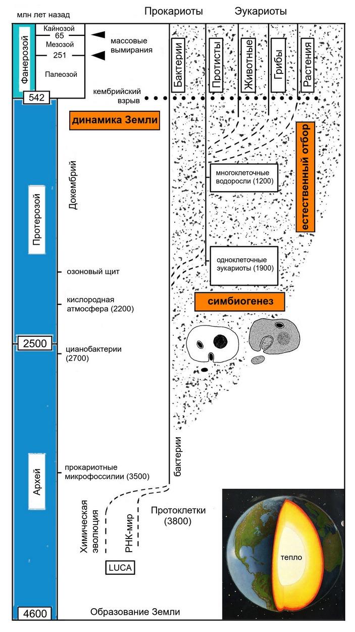 Схема эволюции жизни на Земле