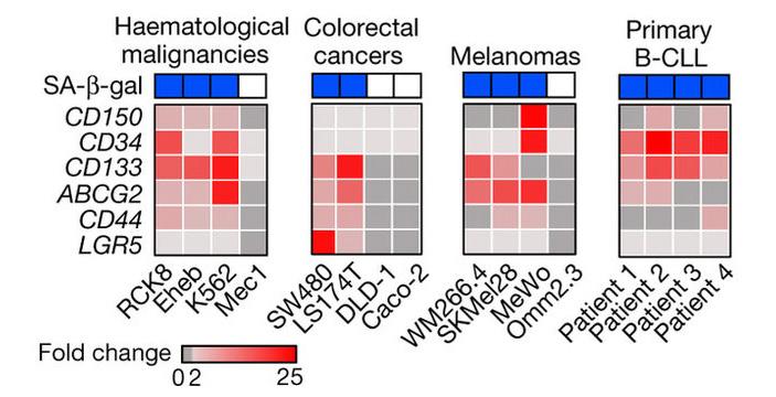 Рис. 2. Экспрессия некоторых генов, свойственных стволовым клеткам, в культурах различных раковых клеток человека