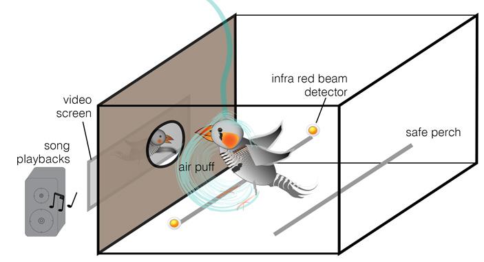 Рис. 4. Схема эксперимента по анализу поведения и мотивации птиц при предъявлении видео