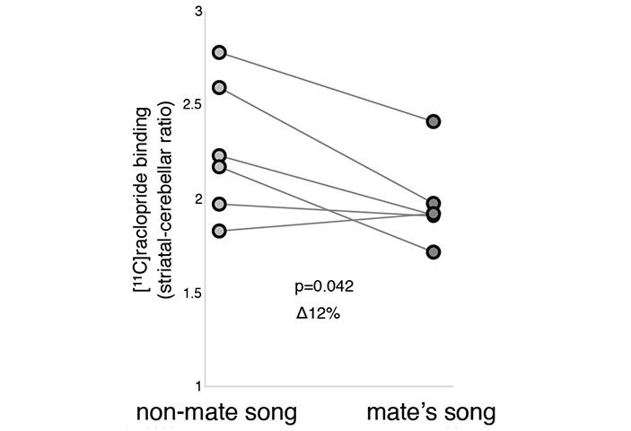 Рис. 6. Результаты ПЭТ при прослушивании «замужними» самками