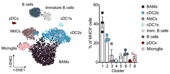 Рис. 3. Карта сходства клеток, у которых на поверхности нашелся ГКГС II