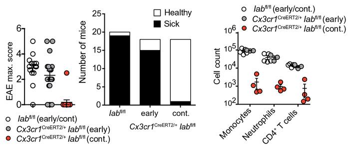 Рис. 4. Тяжесть болезни у ГМ-мышей c тремя разными модификациями