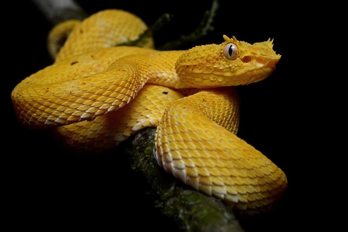 Массовое вымирание амфибий привело кзначительной перестройке сообщества змей тропического леса
