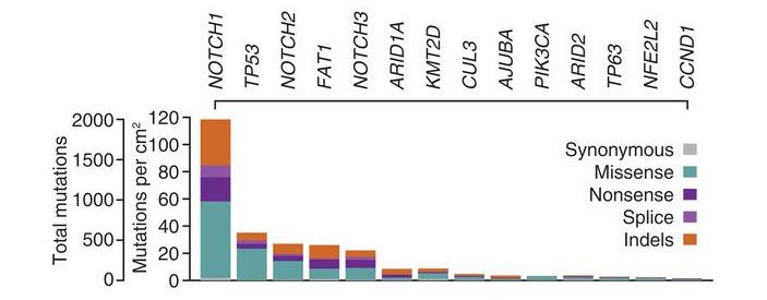 Рис. 3. Частота мутаций в 14 генах, ассоциированных с раком, в  эпителии пищевода