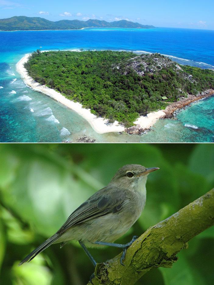 Рис. 1. Тропический остров Кузен (Cousin Island, Сейшельские острова) размером всего 34га. Здесь живет редкая сейшельская камышевка