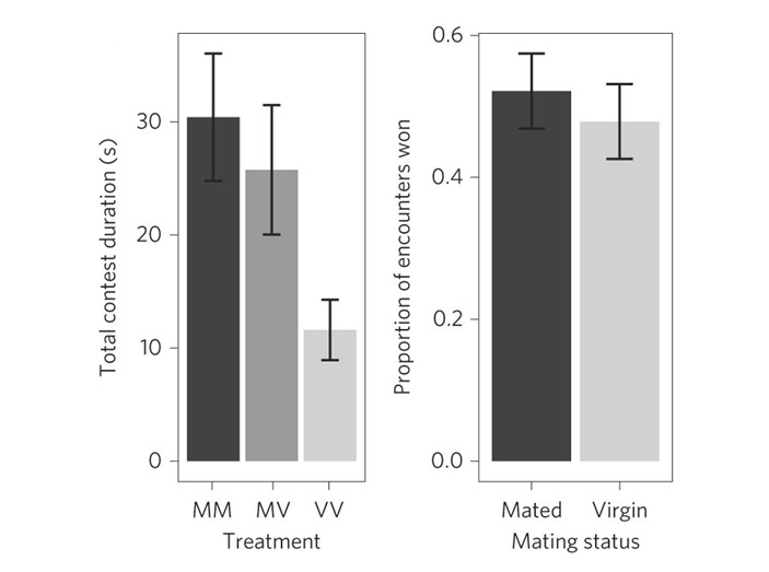 Рис. 2. Продолжительность агрессивных стычек в парах с разным составом