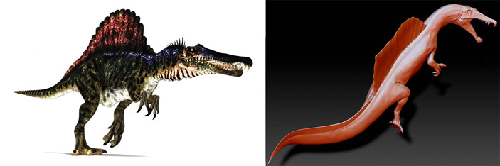 Гигантский динозавр Spinosaurus aegyptiacus оказался водоплавающим