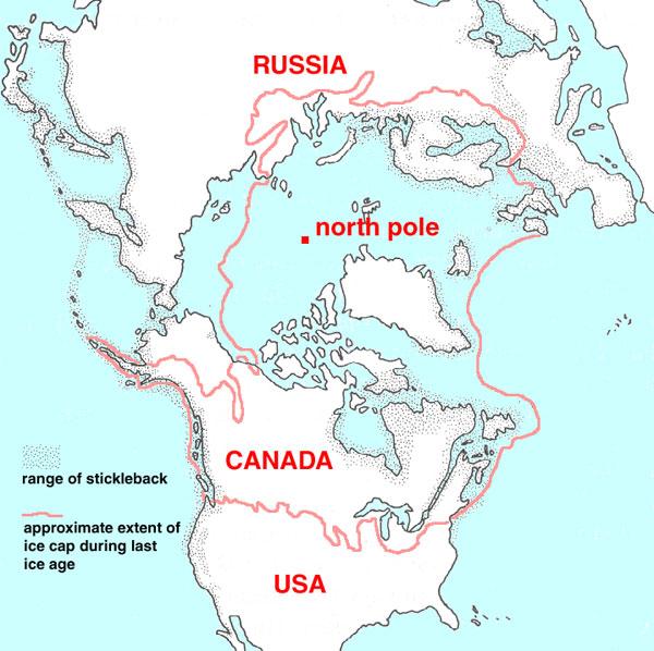 Ареал трехиглой колюшки (показан точками) и область, покрытая ледником во время последнего оледенения (обведена розовой линией). Рис. с сайта www.clarku.edu