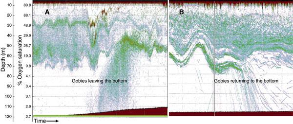 Результаты эхолокационного обследования шельфа Намибии. Изображение  из обсуждаемой статьи в Science