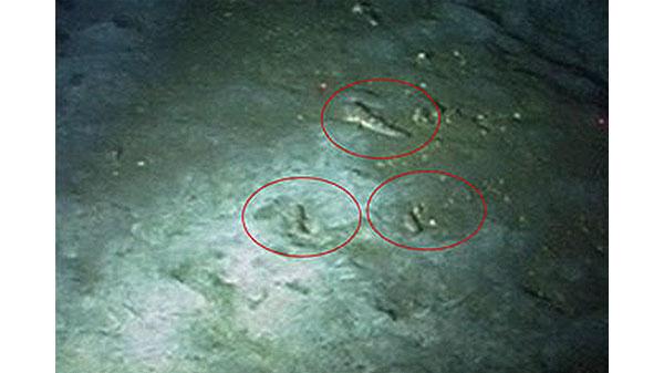 Бородатые бычки Sufflogobius bibarbatus, зарывающиеся в ил на  глубине 130м. Фото ссайта imr.no