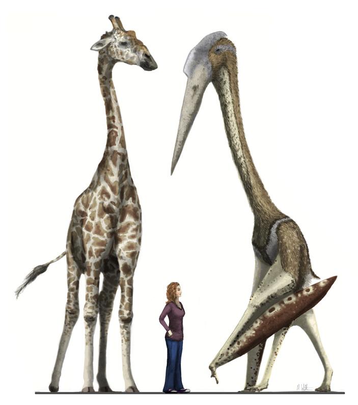 Полет птерозавров входе эволюции неуклонно совершенствовался