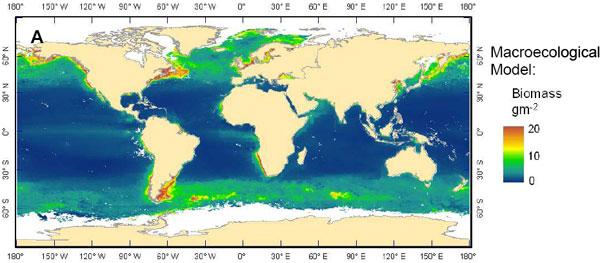 Распределение биомассы рыб по акватории океана (вграммах сырого веса под 1кв.м), согласно «макроэкологической модели», предложенной Саймоном Дженнингсом (S. Jennings, etal. Global-scale predictions of community and ecosystem properties from simple ecological theory// Proc. R. Soc. LondonB. Biol. Sci. 2008. V.275, P.1375). Хорошо видно, что всё рыбное население приурочено кузким прибрежным зонам и районам апвеллингов (подъема глубинных вод, приносящих к поверхности элементы минерального питания, необходимого для фитопланктона). Примерно так же распределяется и осаждение рыбами карбонатов. Рис. из дополнительных материалов кобсуждаемой статье вScience