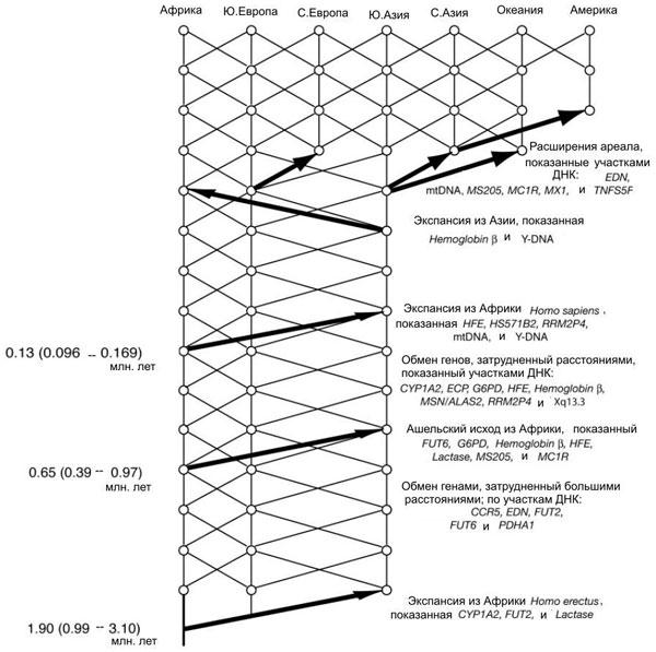 Схема истории человечества по А.Р. Темплтону
