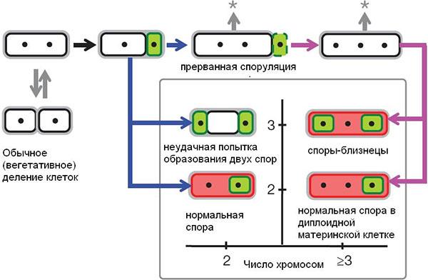 Схема, показывающая