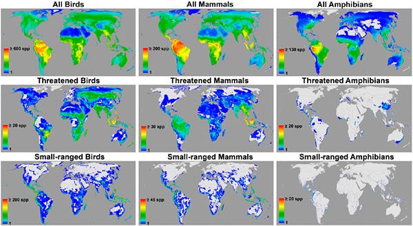 Верхний ряд: области высокого разнообразия всех птиц (All Birds), всех млекопитающих (All Mammals) и всех земноводных (All Amphibians). Влевом нижнем углу каждой карты— шкала, показывающая число видов. Средний ряд— то же самое, но для видов, относящихся к категориям «находящихся под угрозой». Нижний ряд— для видов каждой из трех групп, но имеющих очень небольшой ареал распространения