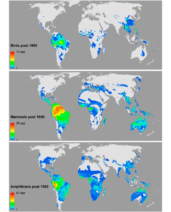 Глобальное распределение разнообразия недавно (после 1950года) описанных видов позвоночных. Показаны области распространения для птиц (вверху), млекопитающих (посередине) и земноводных (внизу)