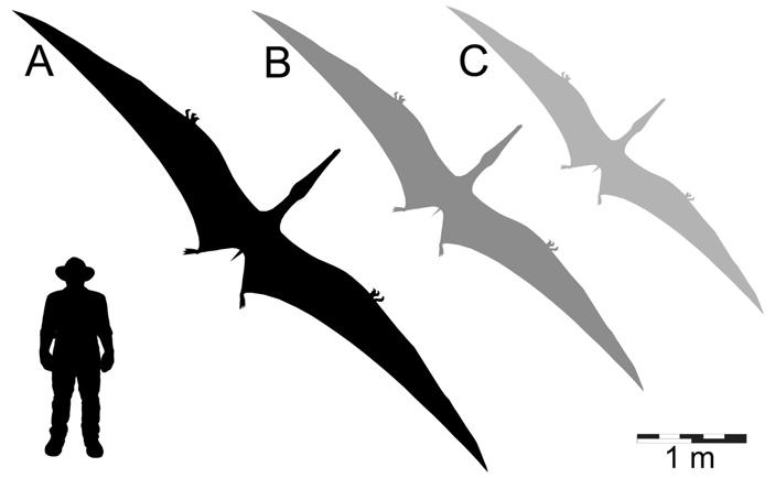 Размеры тапуннгаки в сравнении с митунгой и ферродрако