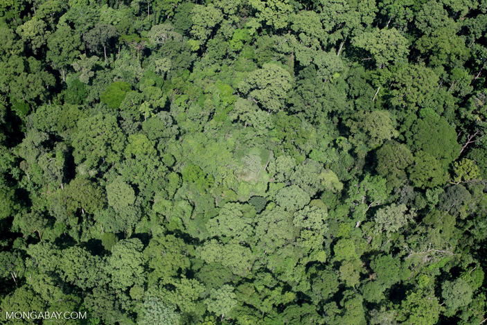 Полог тропического дождевого леса