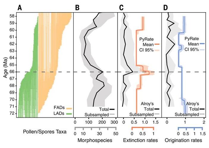 Рис. 2. Динамика разнообразия растений экваториальной Южной Америки в маастрихте