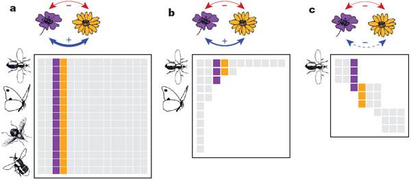Три варианта структуры мутуалистических связей всообществе растений и насекомых-опылителей. Рис. из обсуждаемой статьи Bastolla etal.