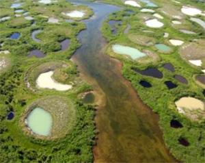 Талые озера, называемые также термокарстовыми,— один из важнейших источников парниковых газов. На снимке: талые озера в Северном Квебеке (Канада). Фото с сайта www.cen.ulaval.ca