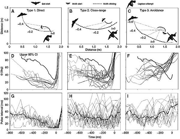 Три типа реакций летучей мыши