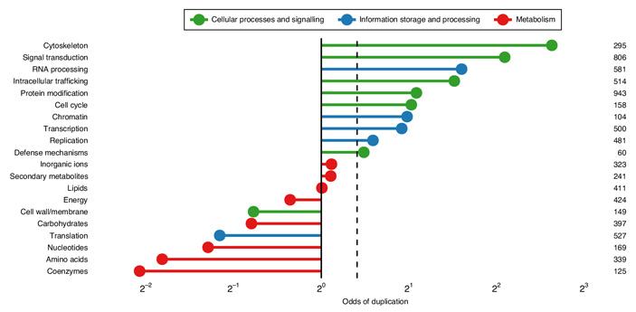 История дупликаций консервативных генов уточняет начальные этапы эволюции эукариот