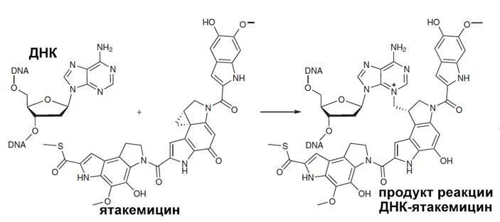 Рис. 2. Алкилирование азотистого основания ДНК ятакемицином