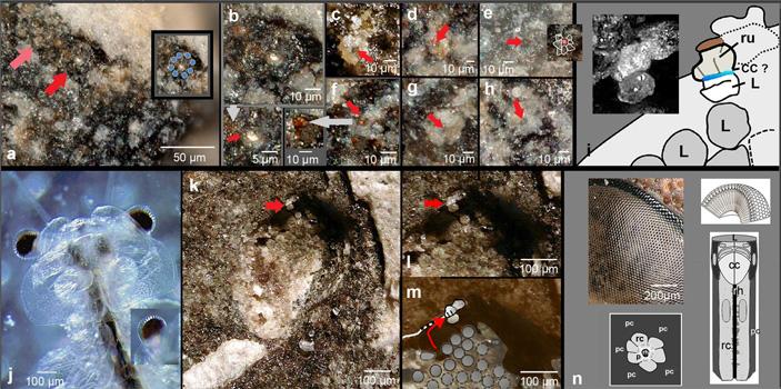 Глаза силурийских трилобитов были устроены так же, как глаза современных насекомых
