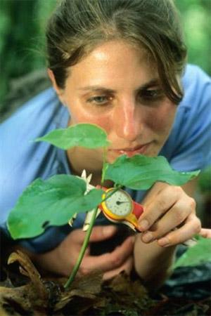 Лиза Коумита (Lisa S.Comita), первый автор обсуждаемой статьи в Science, измеряет проросток дерева в тропическом лесу на острове Барро-Колорадо. Фото Christian Ziegler с сайта www.eurekalert.org