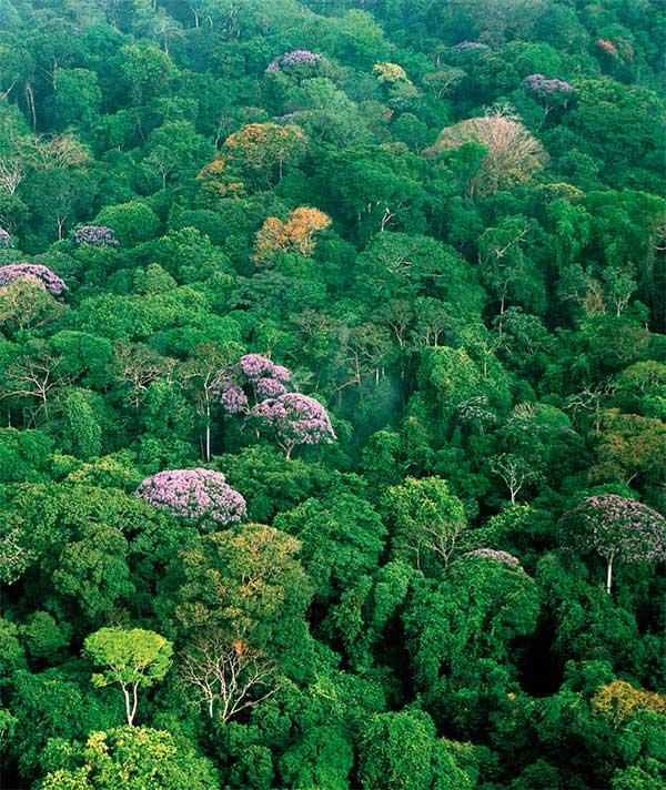 Вид сверху крон тропического леса на острове Барро-Колорадо (зона Панамского канала). Фото ©Christisn Ziegler из обсуждаемой статьи Owen T. Lewis в Nature