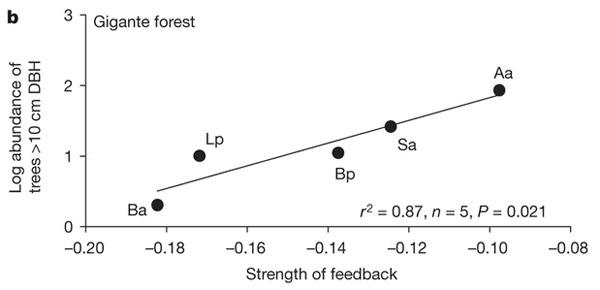 Связь между силой отрицательного воздействия на рост проростков «своей» почвы (по горизонтали) и обилием вида (по вертикали) по данным полевого эксперимента в тропическом лесу в материковой части Панамы, недалеко от о-ва Барро-Колорадо. Редкие виды характеризуются более сильной реакцией, чем массовые. Обозначения видов: Aa— Apeiba aspera; Sa— Simarouba amara; Ba— Brosimum alicastrum; Bp— Beilschmiedia pendula; Lp— Lacmellea panamensis. Рис. из обсуждаемой статьи Mangan et al. (Nature. 2010. V.466. P.752–755)