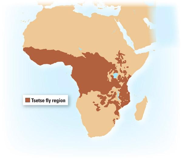 Область распространения мухи цеце